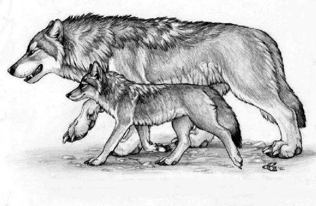 басня-крылова-волк-и-волчонок