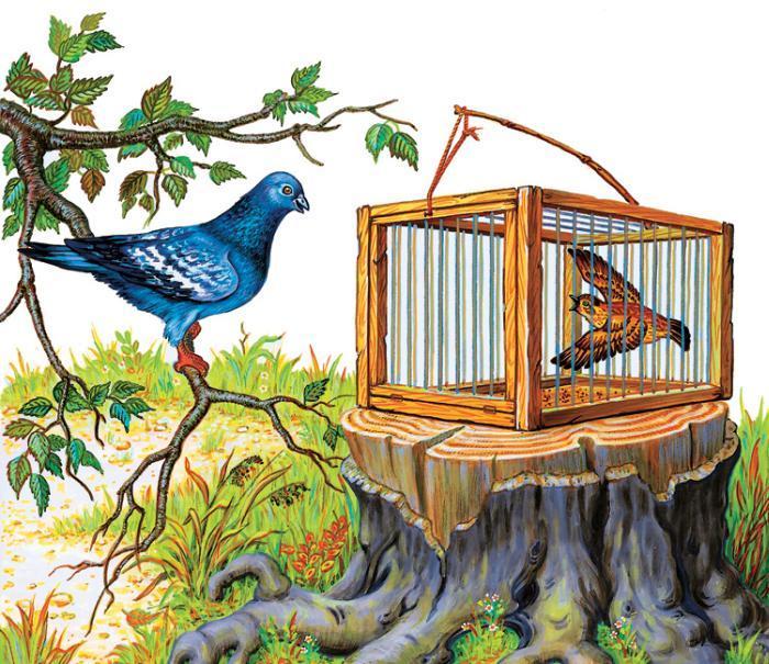 басня-крылова-чиж-и-голубь