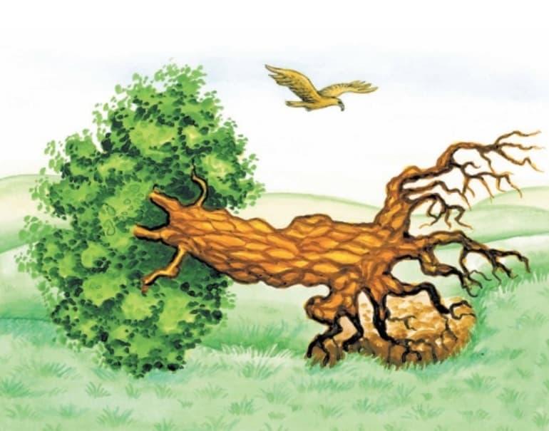 басня-крылова-листы-и-корни