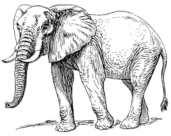 басня-крылова-слон-в-случае